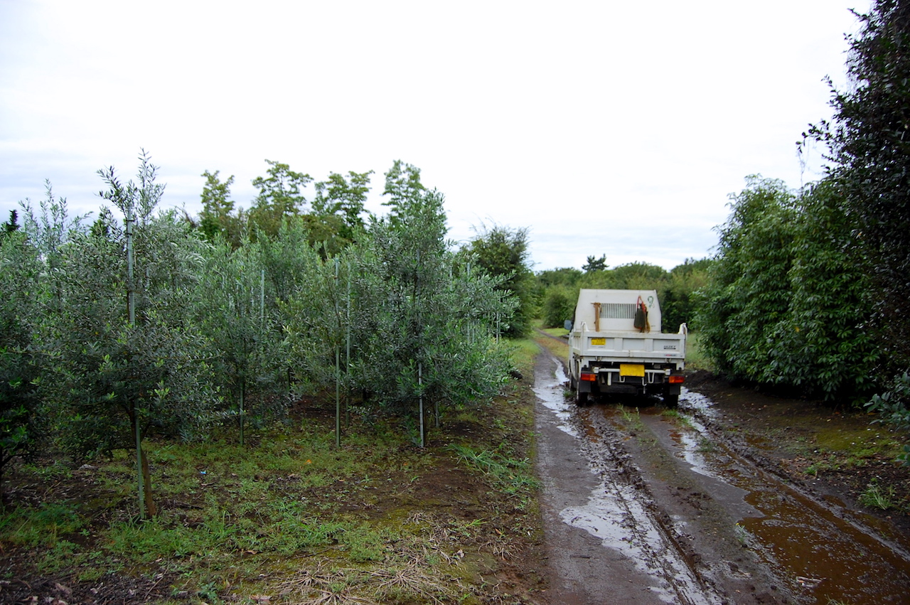 3ヘクタールの農地内は軽トラックで移動する