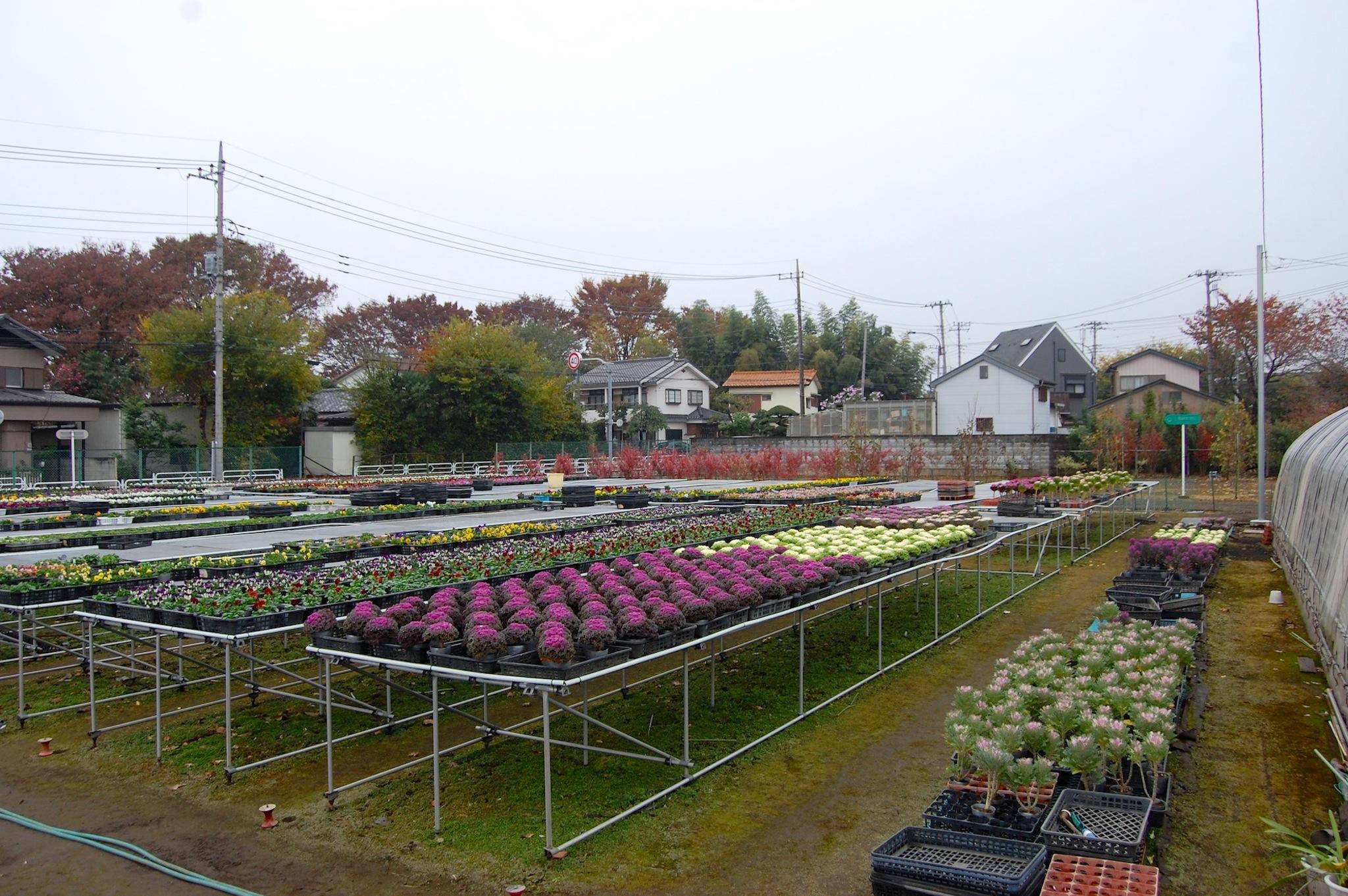 花栽培用のビニールハウス以外の農地(一部)
