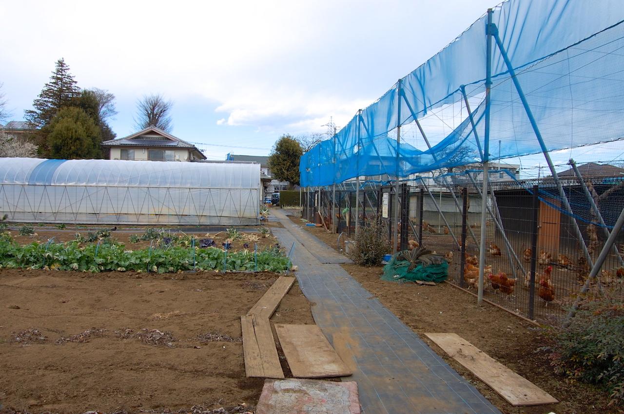 畑での野菜栽培、平飼いの鶏とその上のキウイ棚が共存する吉野さんの農地