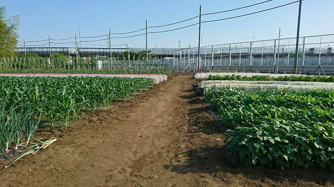 三鷹市北野の野菜専門庭先直売所「森屋農園」