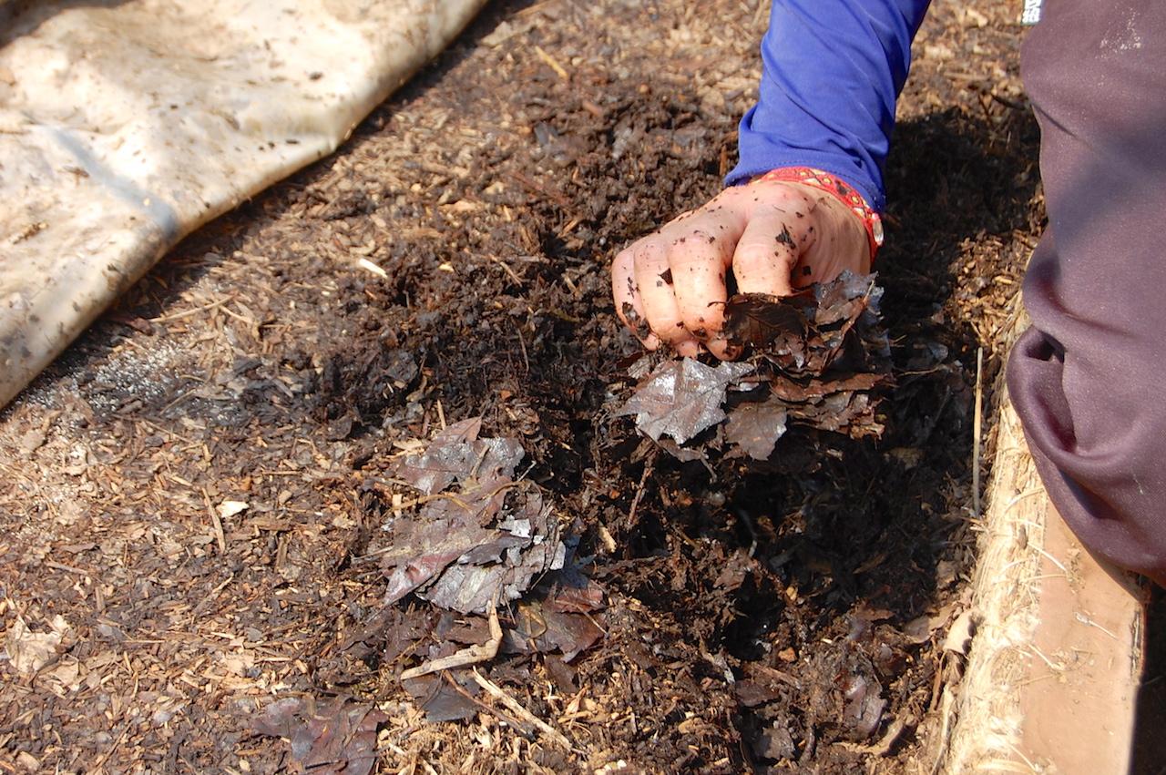 落ち葉が栄養豊かな堆肥に変わっていく
