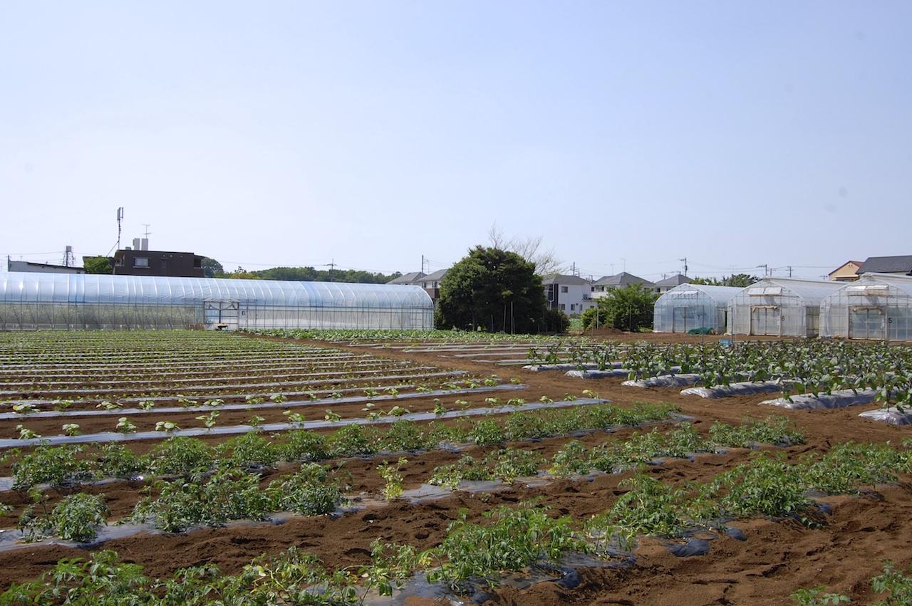 伊藤さんの畑、畝やビニルハウスごとに多品種が生産されている