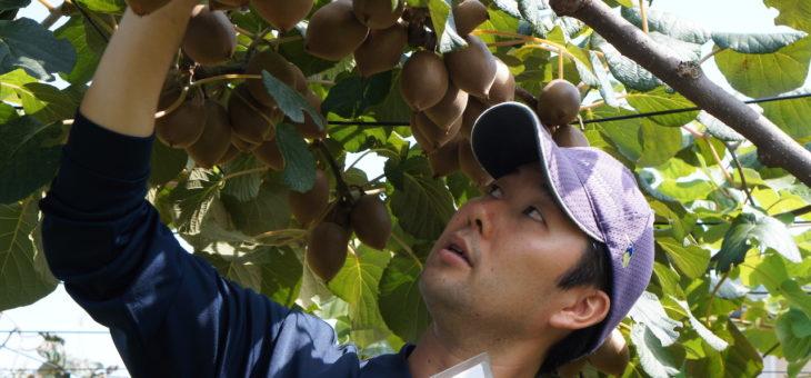 三鷹市野崎の吉野園さんで「三鷹特産キウイフルーツの収穫作業を学ぶ会」を開催します!!
