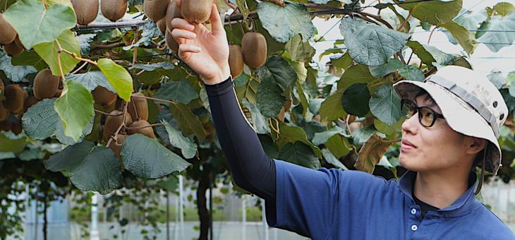 「三鷹のキウイフルーツといえば島田果樹園」と言われるブランドを目指す – 島田果樹園の島田穂隆さん